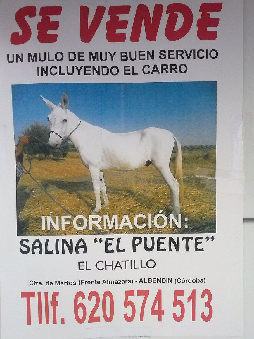 Se vende mulo