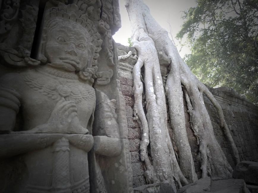 Gran raiz de árbol en templo
