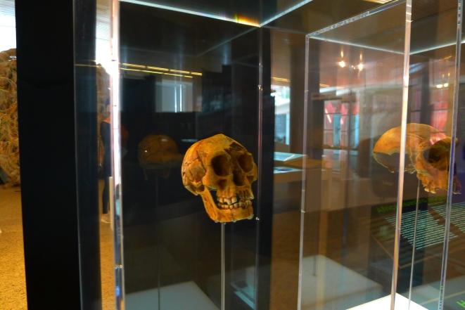 Una visita a Burgos debe incluir el Museo de la Evolución, donde está mi otro yo, el Homo antecessor